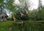 clone - Pond Jumpn - web size 01